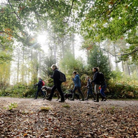 New Forest Walking Event Walking Festival Dog Walk 2016 0